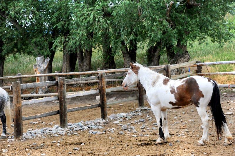 Pinte o cavalo fotografia de stock
