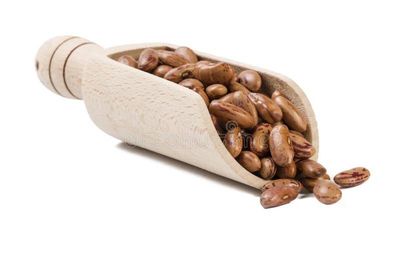 Pinto φασόλι στην ξύλινη σέσουλα που απομονώνεται στο άσπρο υπόβαθρο διατροφή βιο Φυσικό συστατικό τροφίμων στοκ εικόνες