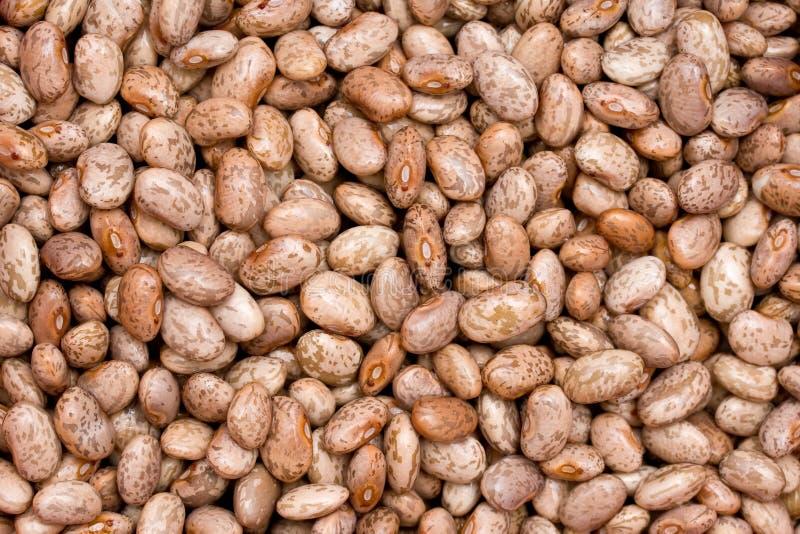 Pinto beans royalty free stock photos