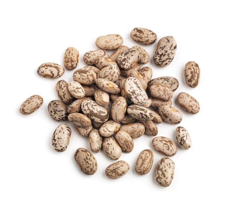 Pinto Beans royaltyfri foto