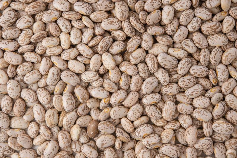 Pinto Beans Close Up Top-Ansicht, Nahrungsmittelhintergrund, getrocknete Bohnen, Hülsenfrucht-Familie lizenzfreie stockfotos