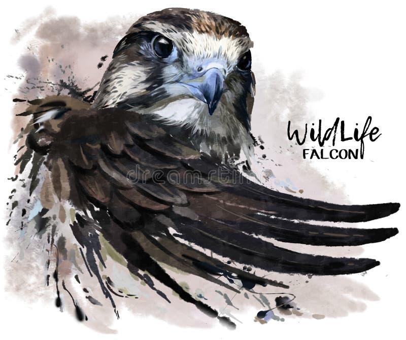 Pintor da aquarela do falcão ilustração stock