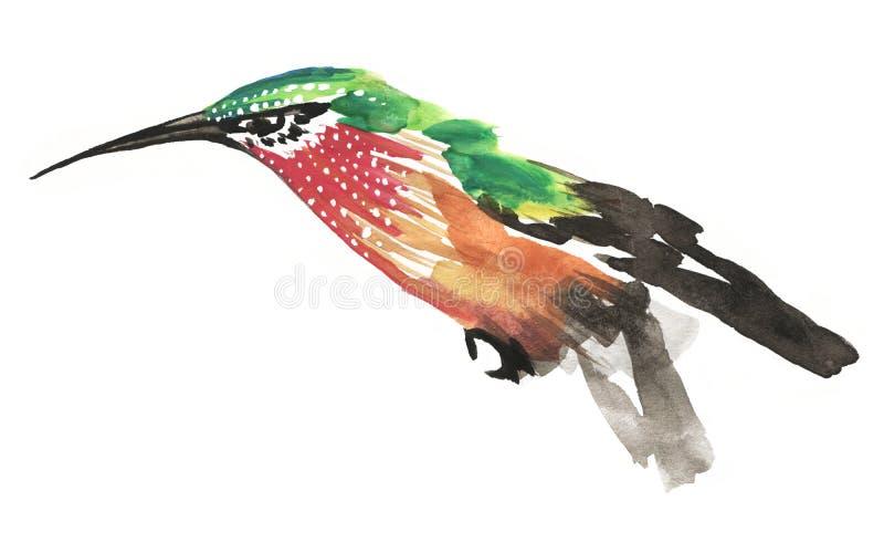 Pintura à moda da aquarela do pássaro verde e vermelho do zumbido ilustração royalty free