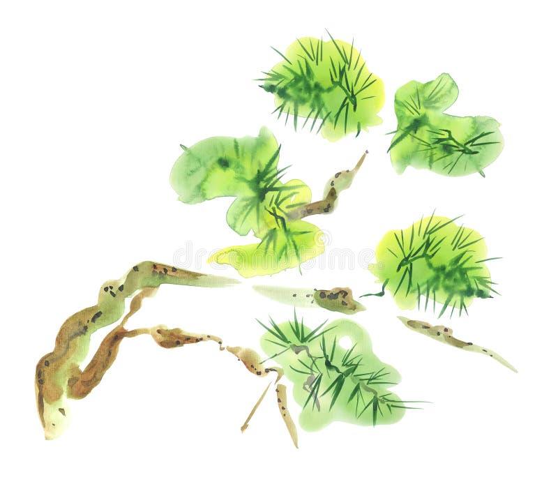 Pintura asiática del estilo de la acuarela del árbol de pino stock de ilustración