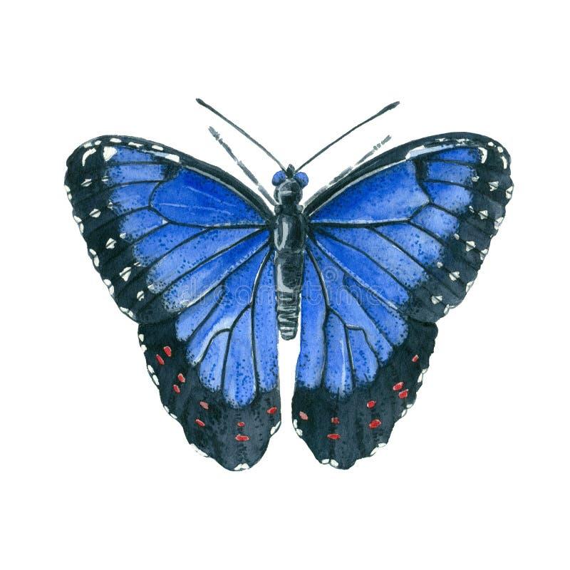Pintura azul de la acuarela de la mariposa de Morpho ilustración del vector