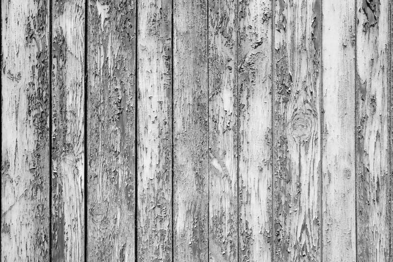 Pintura blanca vieja escamosa en los tableros de madera grises imágenes de archivo libres de regalías