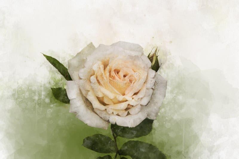 Pintura color de rosa blanca de la flor para casarse la tarjeta de la invitación o de cumpleaños Illust floral ilustración del vector