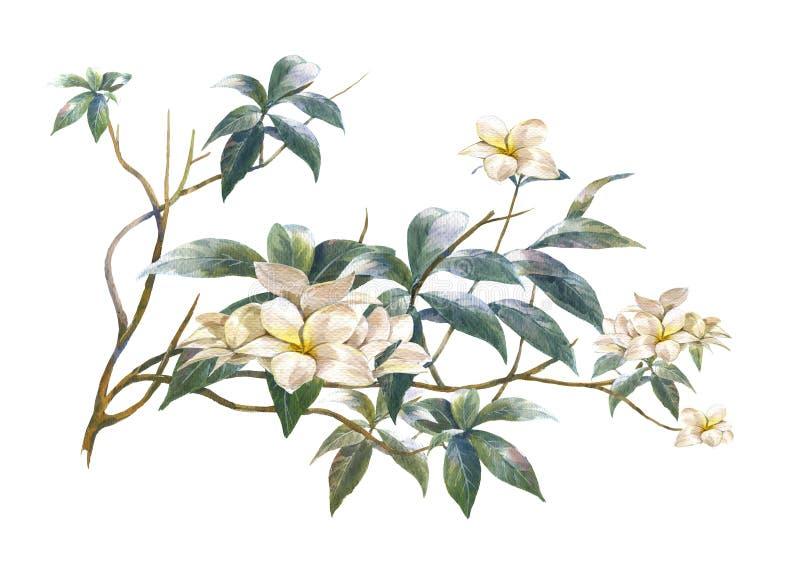 Pintura colorida abstracta de la acuarela de las flores ilustración del vector