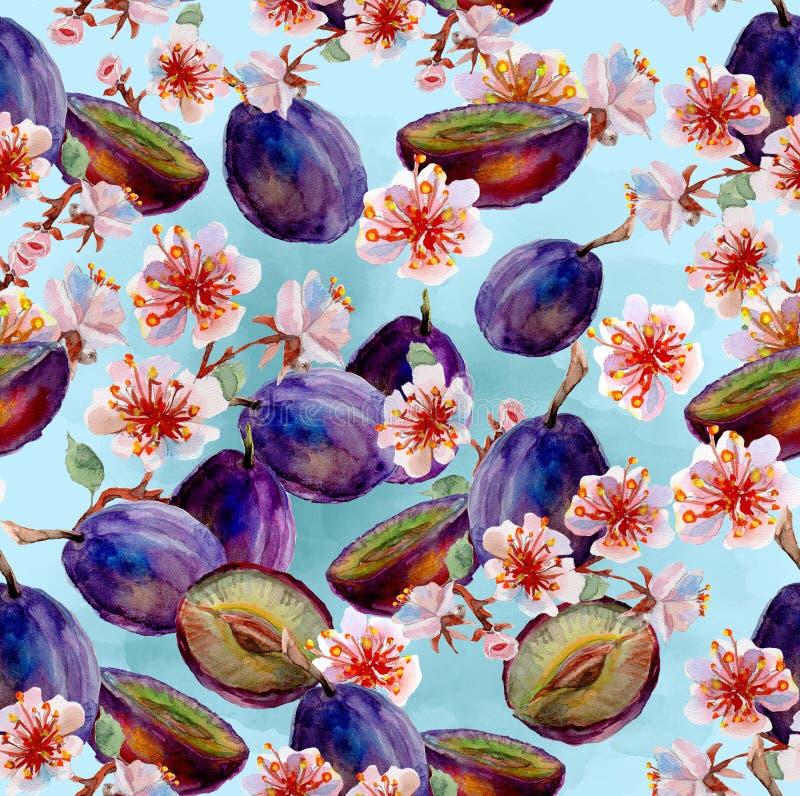 Pintura da aguarela Ameixas e flores ilustração stock