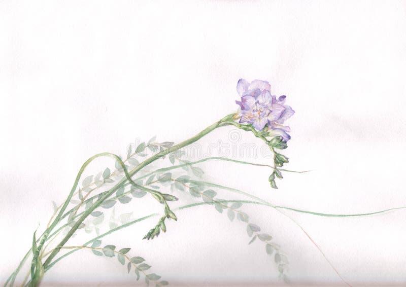 Pintura da aguarela da flor do Freesia