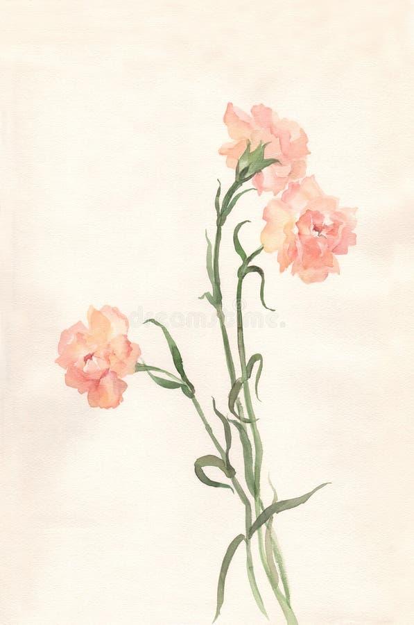 Pintura da aguarela dos cravos ilustração do vetor