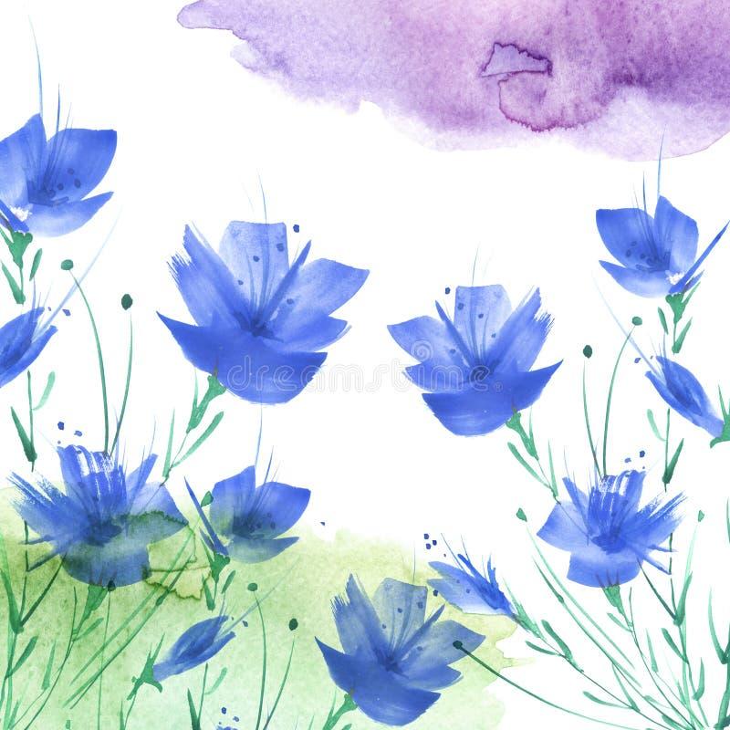 Pintura da aguarela Um ramalhete das flores das papoilas azuis, wildflowers em um fundo isolado branco foto de stock