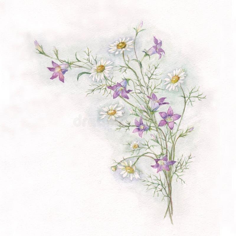 Pintura da aquarela da campainha e do chamomole ilustração stock