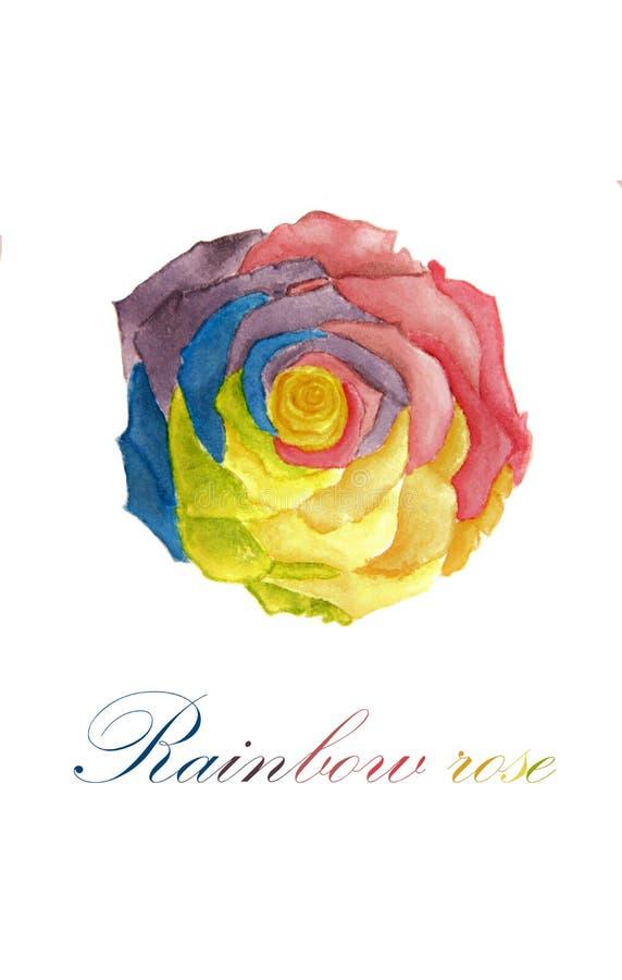 Pintura da aquarela da flor cor-de-rosa do arco-íris ilustração royalty free