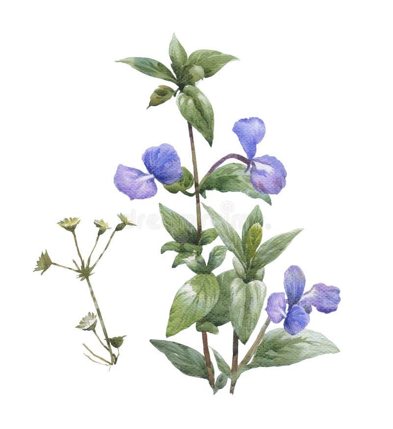 Pintura da aquarela das folhas e da flor, no branco fotos de stock