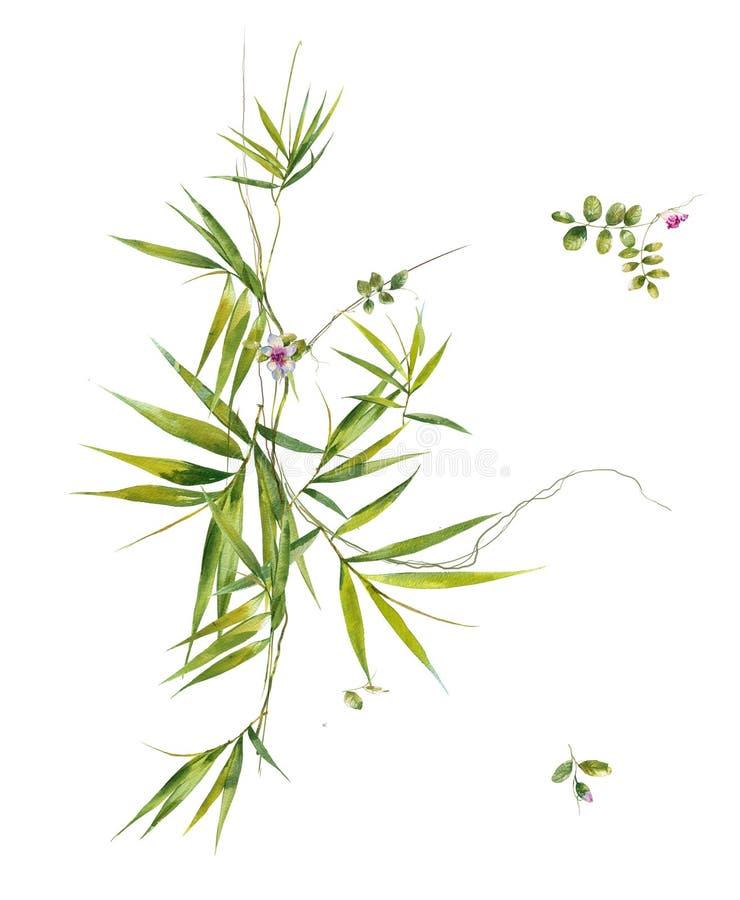Pintura da aquarela das folhas e da flor, no branco imagem de stock royalty free