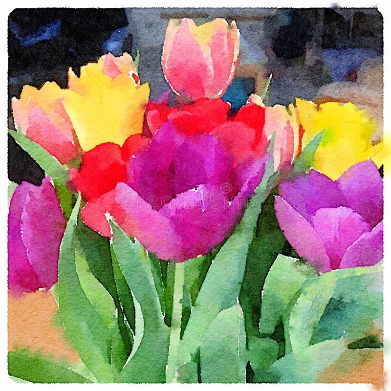 Pintura da aquarela de Digitas de tulipas coloridas ilustração royalty free