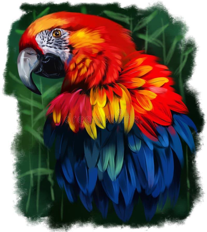 Pintura da aquarela do papagaio ilustração royalty free