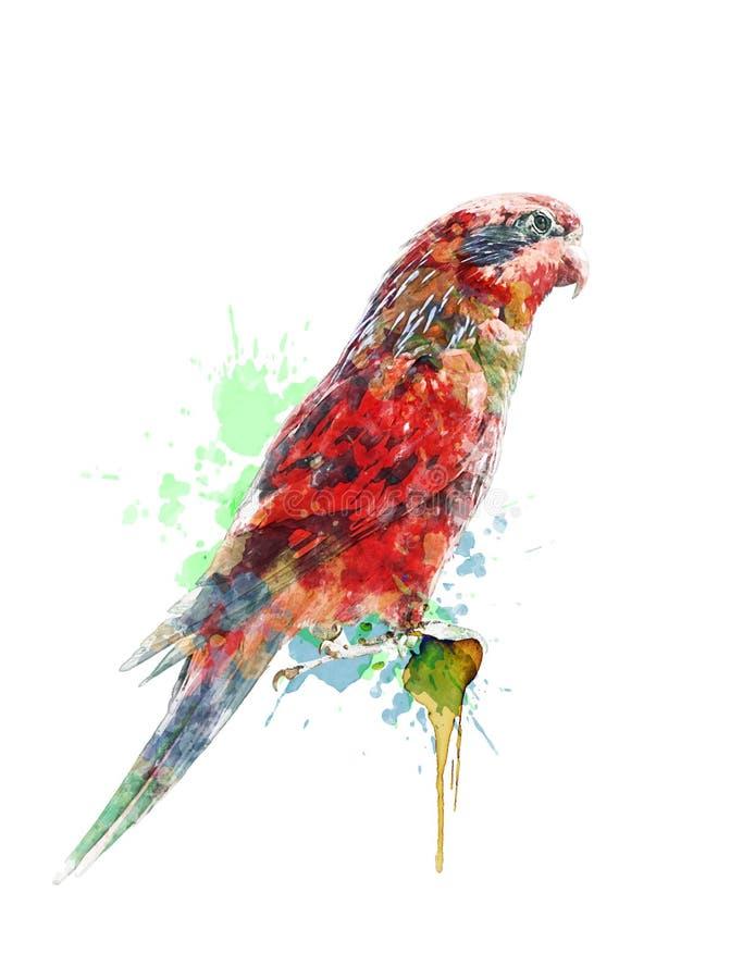 Pintura da aquarela do papagaio colorido ilustração do vetor