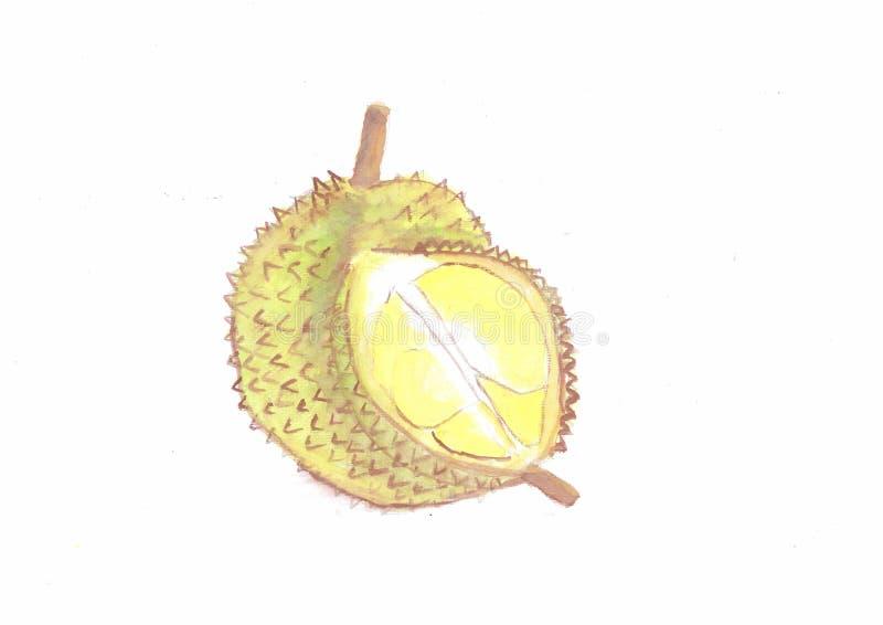 Pintura da cor de água dos durians imagens de stock royalty free