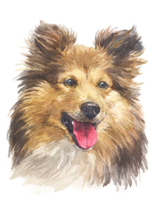 Pintura da cor de água, raça 038 do cão-pastor ilustração stock