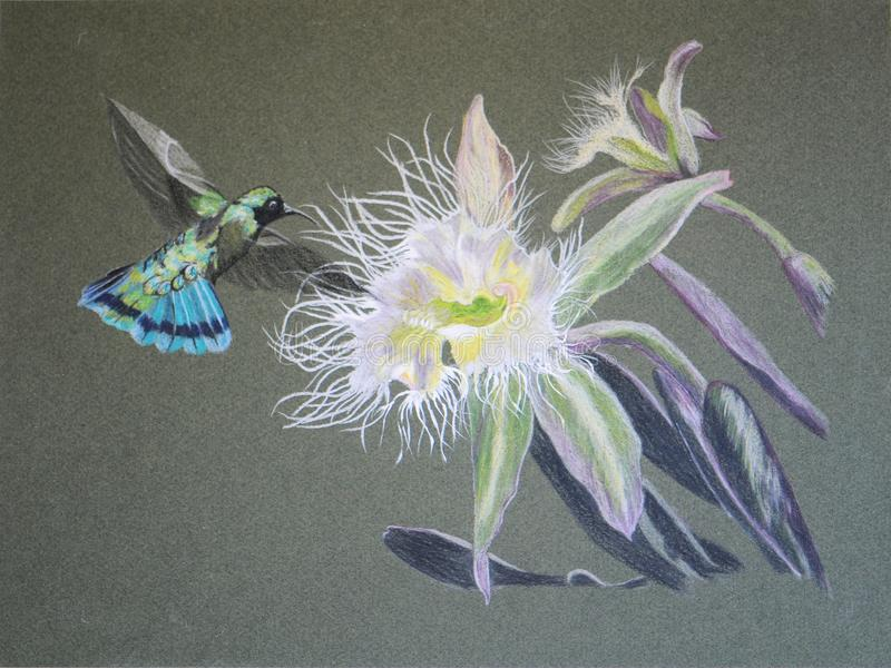 Pintura da flor do colibri e da orquídea fotografia de stock