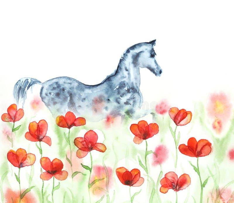 A pintura da mão da aquarela dapple o cavalo árabe cinzento em flores vermelhas do prado das papoilas no branco ilustração do vetor