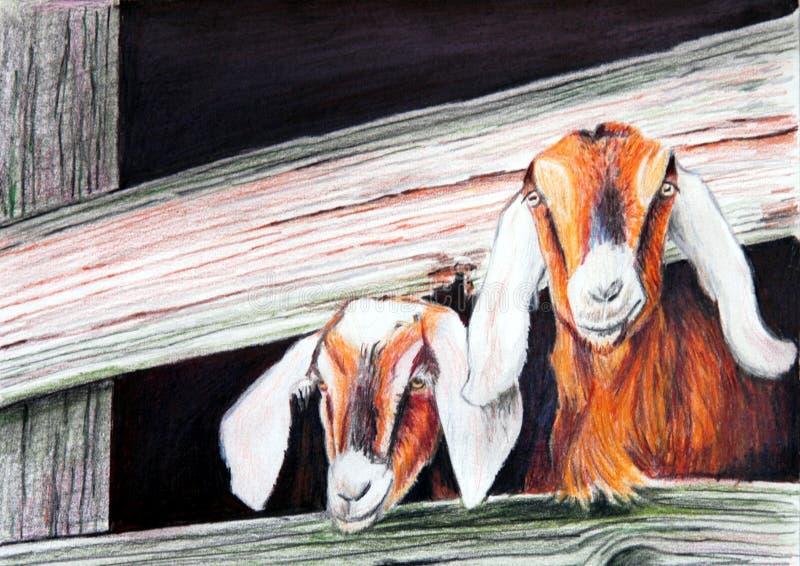 Pintura das cabras foto de stock