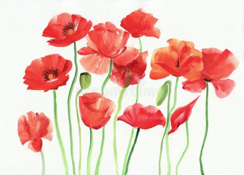 Pintura de la acuarela de amapolas rojas stock de ilustración
