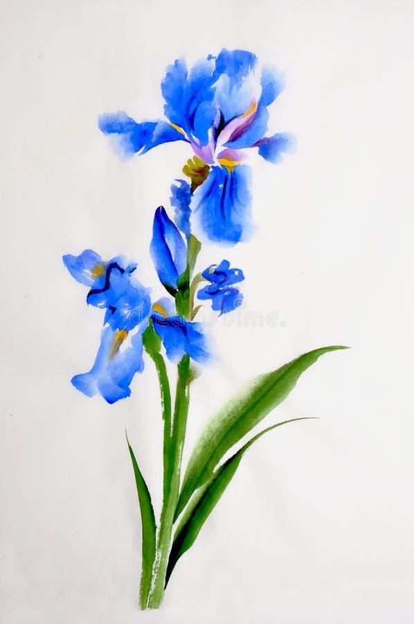 Pintura de la acuarela de la flor del iris stock de ilustración