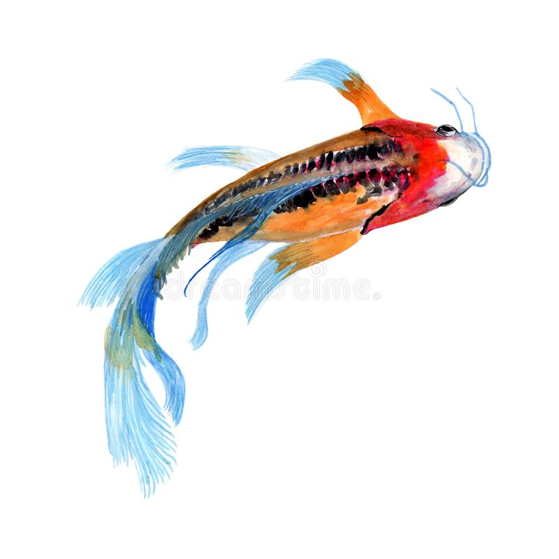 Pintura de la acuarela del ejemplo de los pescados de la mierda de Koi Acuarela pintada a mano ejemplo de un pescado de la mierda stock de ilustración