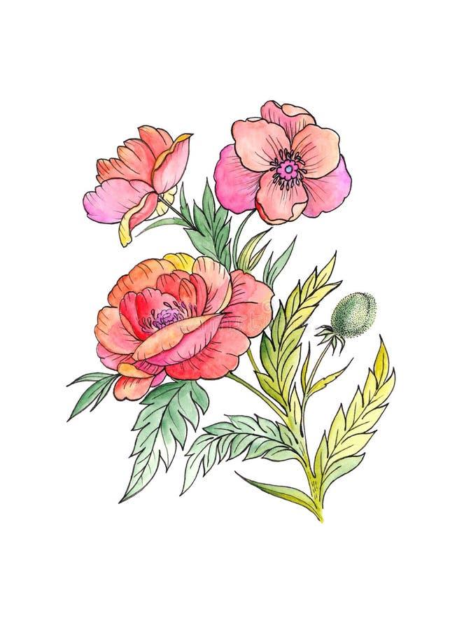 Pintura de la acuarela de las flores rojas de las amapolas stock de ilustración