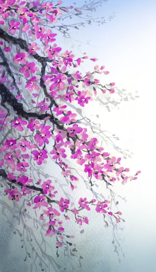 Pintura de la acuarela Ramas de la cereza de los flores ilustración del vector