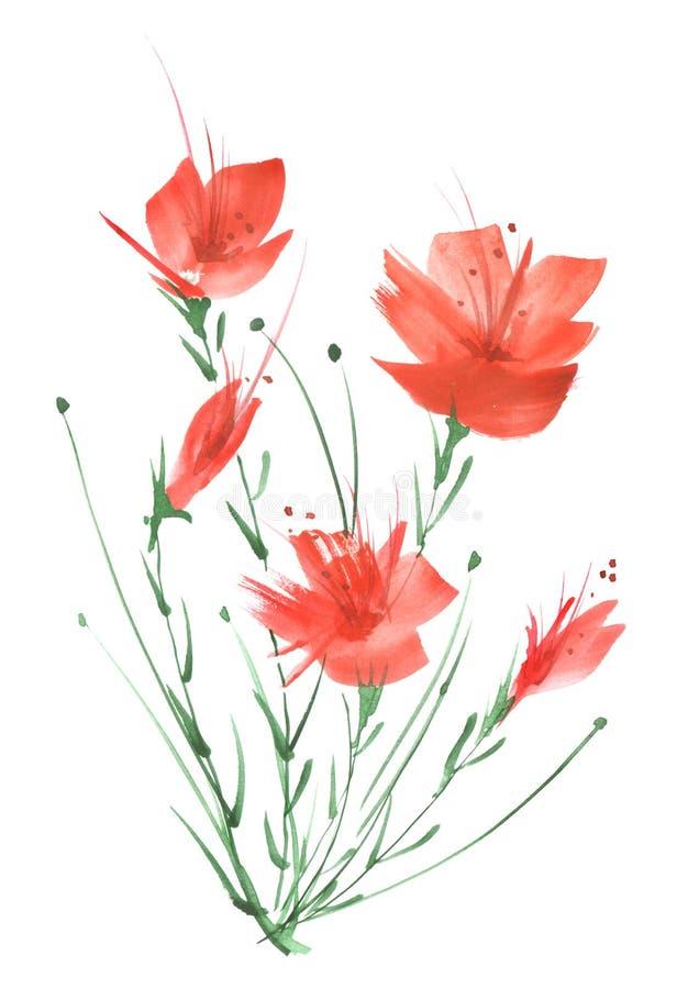 Pintura de la acuarela Un ramo de flores de las amapolas rojas, wildflowers en un fondo aislado blanco Acuarela dibujada mano flo libre illustration
