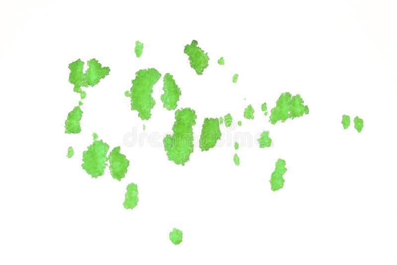 Pintura de la salpicadura del verde de la acuarela en el Libro Blanco foto de archivo libre de regalías