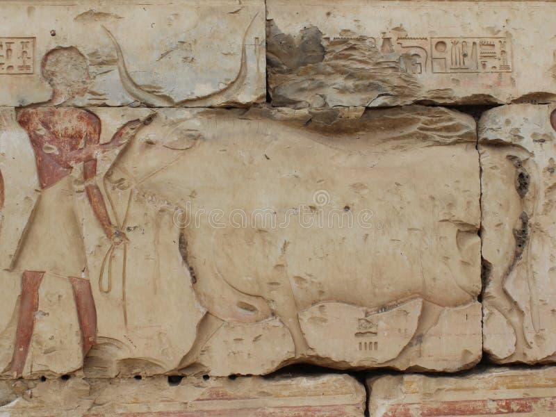 Pintura de pared del hombre y de la vaca imagen de archivo