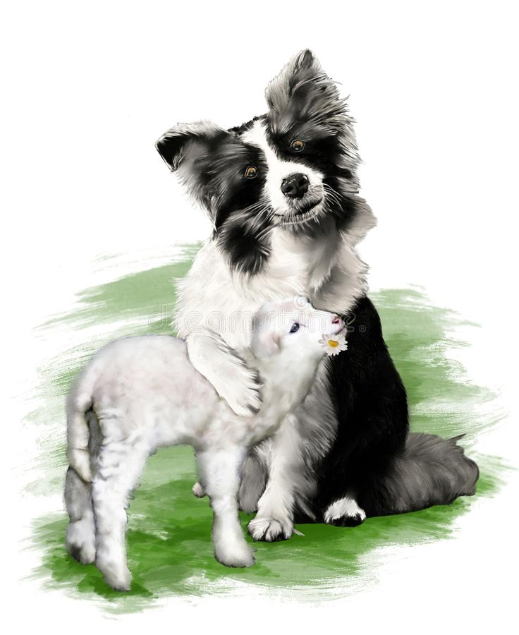 Pintura de um cão, border collie, abraçando um cordeiro loving, no fundo branco ilustração do vetor