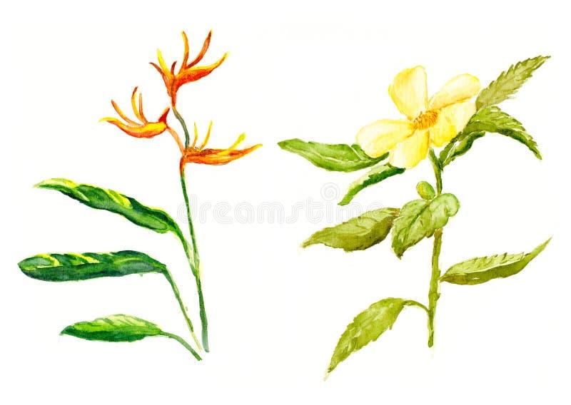 Pintura del color de agua libre illustration