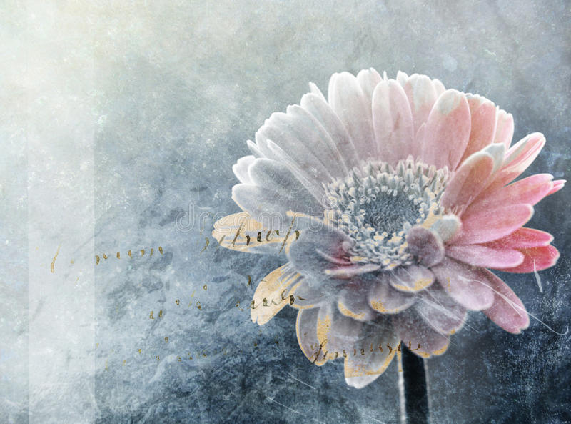 Pintura digital da flor abstrata do inverno fotos de stock