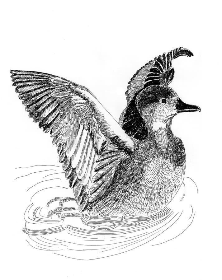 Pintura do esboço do illustrantion dos patos selvagens ilustração royalty free