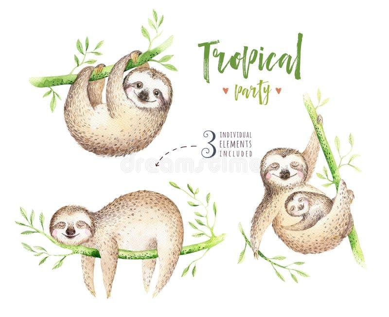 Pintura isolada berçário da preguiça dos animais do bebê Desenho tropical do boho da aquarela, ilustração tropical da criança pal ilustração do vetor