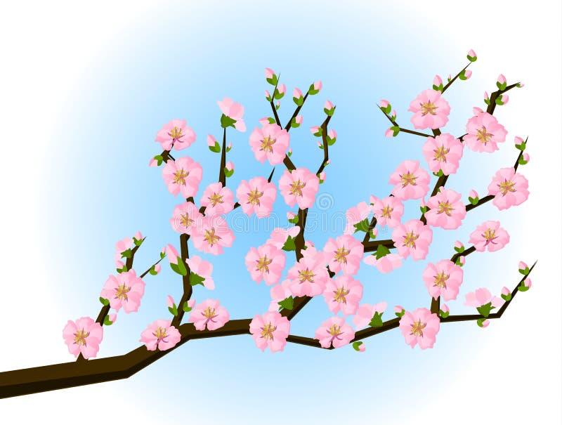 Pintura oriental del estilo, flor de cereza en resorte libre illustration