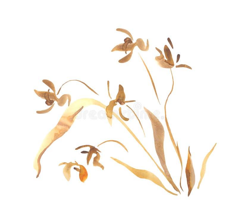 Pintura selvagem da aquarela da flor da orquídea ilustração stock