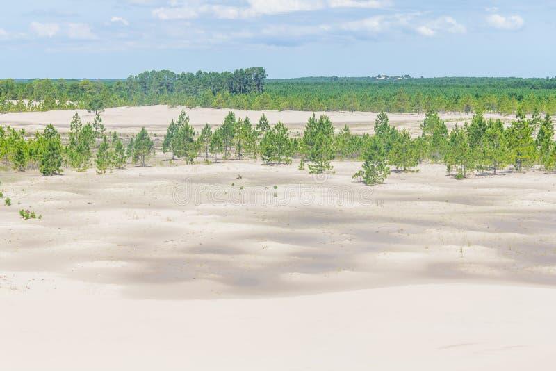 Pinuselliottiiskog som täckas av dyn på Lagoa DOS Patos fotografering för bildbyråer