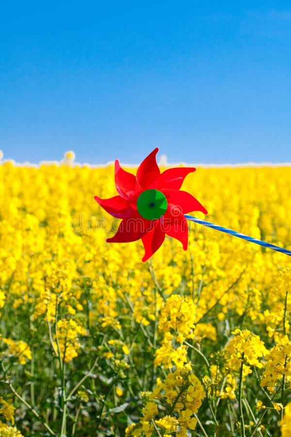 Download Pinwheel  In A Field Of Yellow Stock Image - Image: 19467795