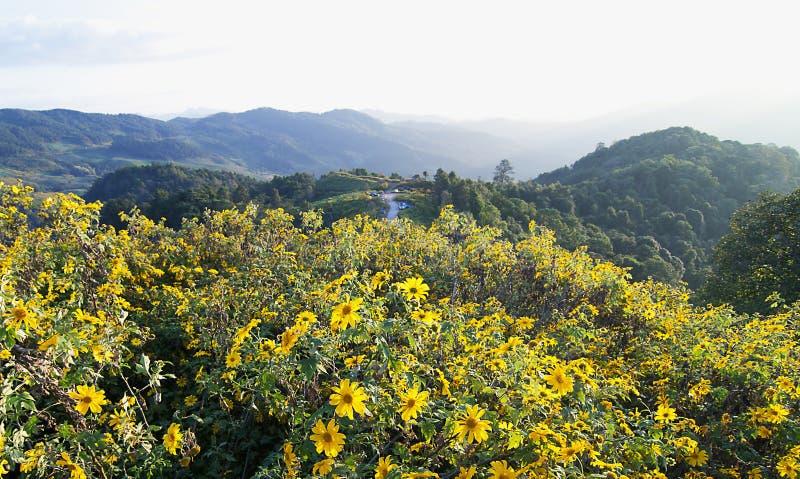 Pinzas de Dok Bua en una montaña imagen de archivo