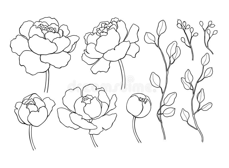 Pioenbloem en van de bladerenlijn tekening Vectorhand getrokken overzicht royalty-vrije illustratie