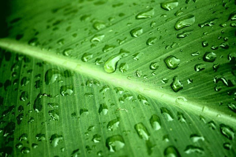 Pioggia dell'acqua dolce fotografie stock
