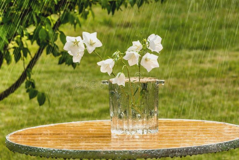 Pioggia di estate e campane bianche fotografia stock