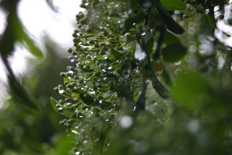 Pioggia di sorgente 2 fotografia stock